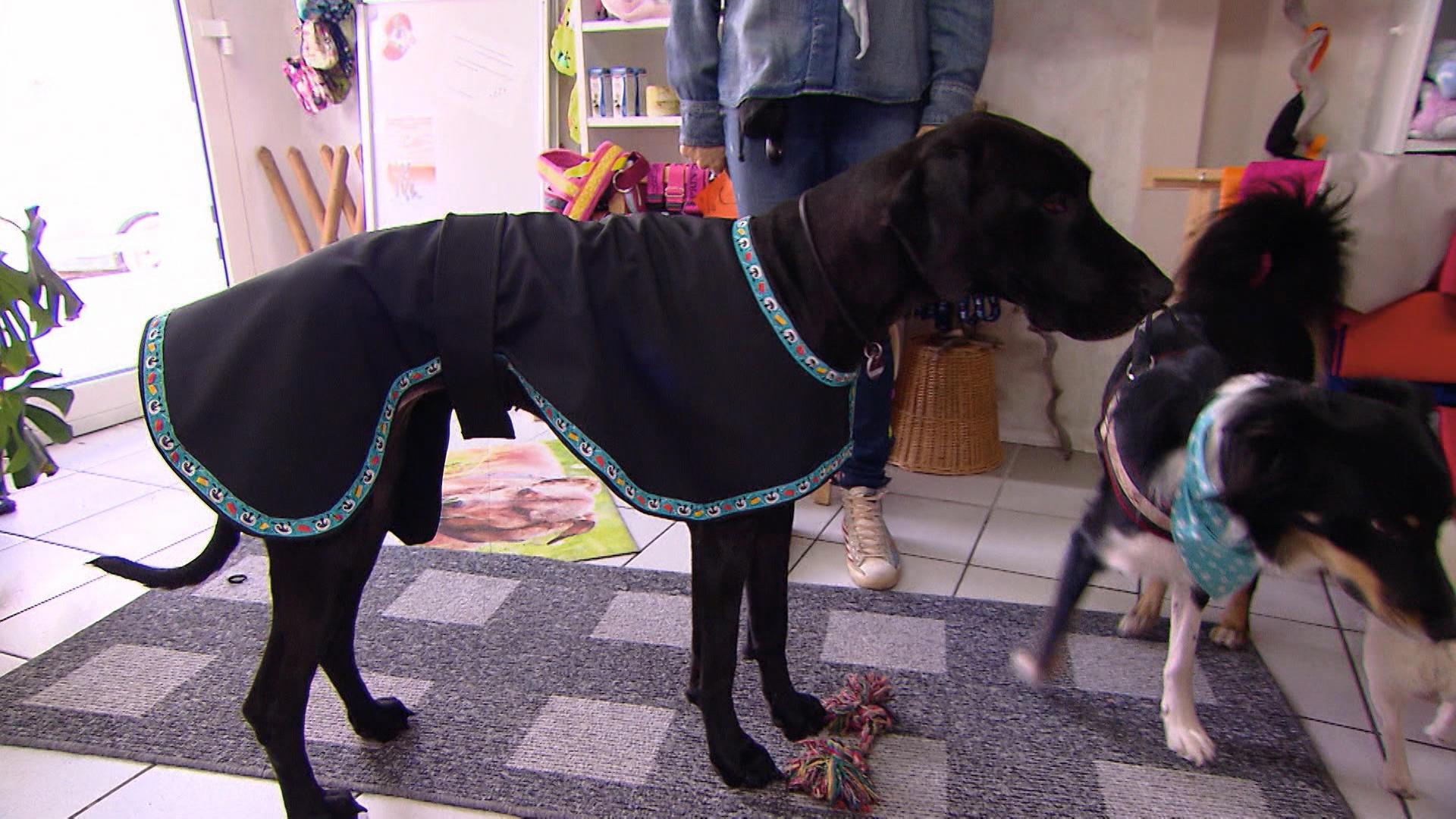 hundkatzemaus: Hundedecken selbst machen