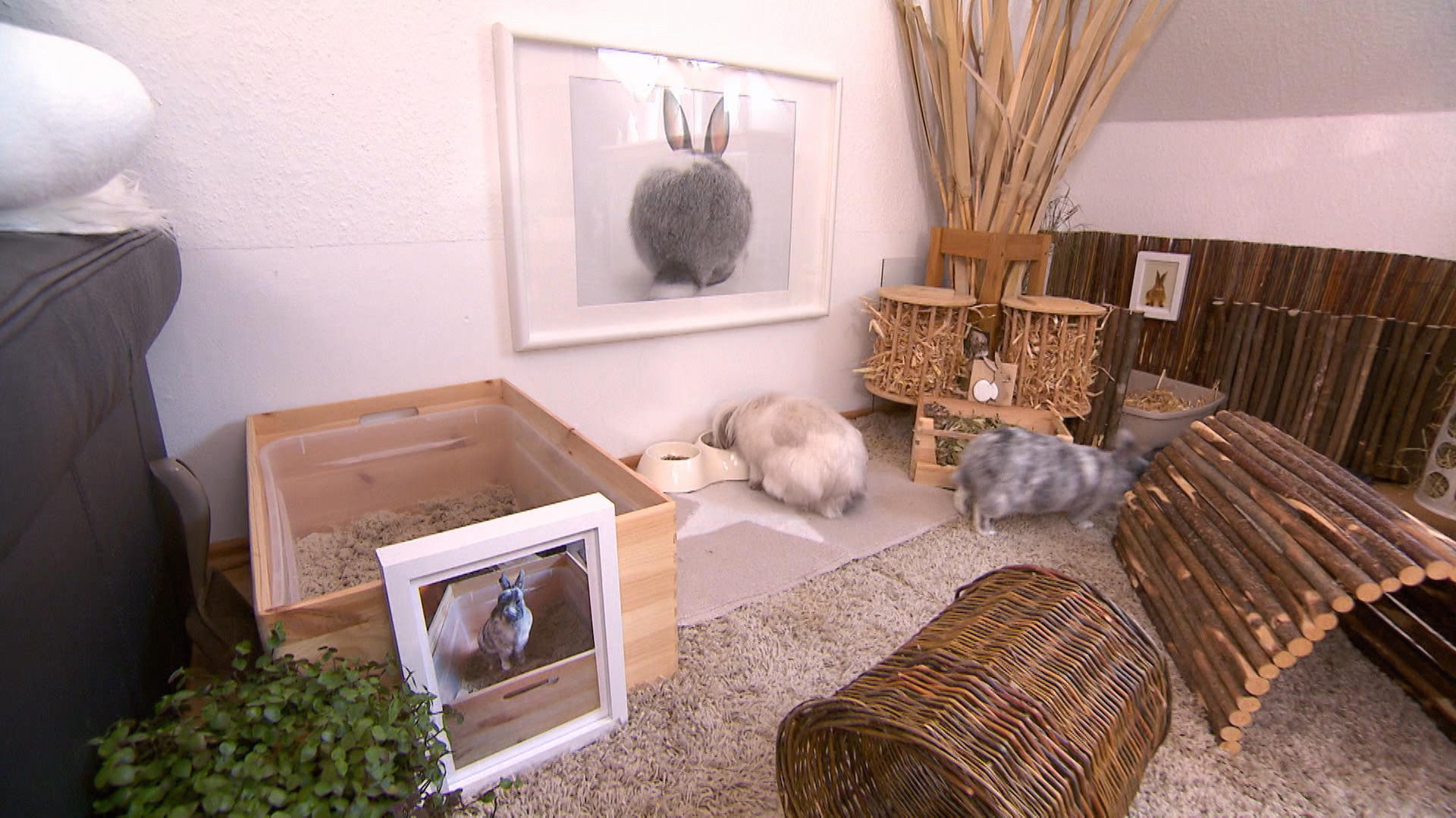 hundkatzemaus: diana zeigt kaninchen in wohnungshaltung