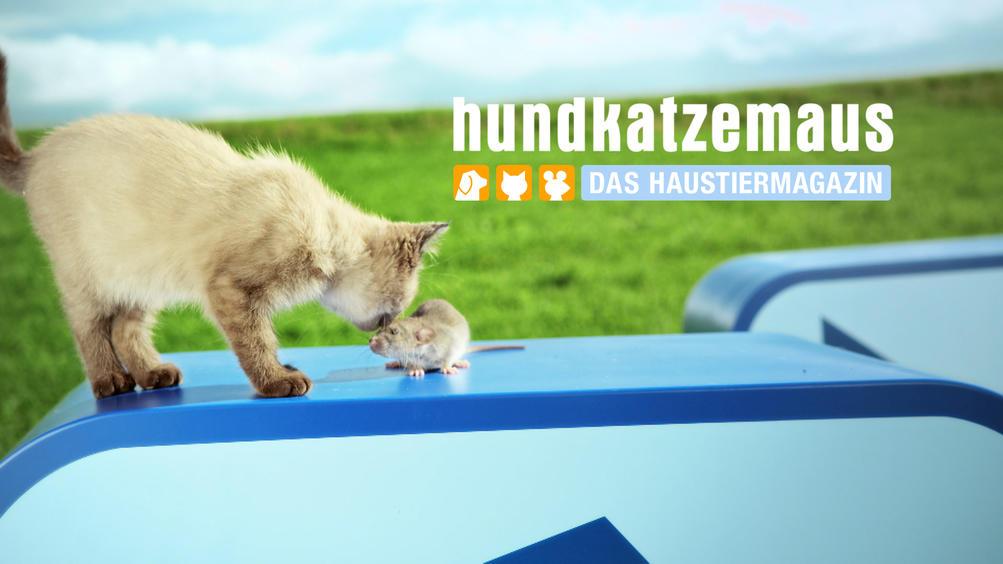 Vox Hund Katze Maus