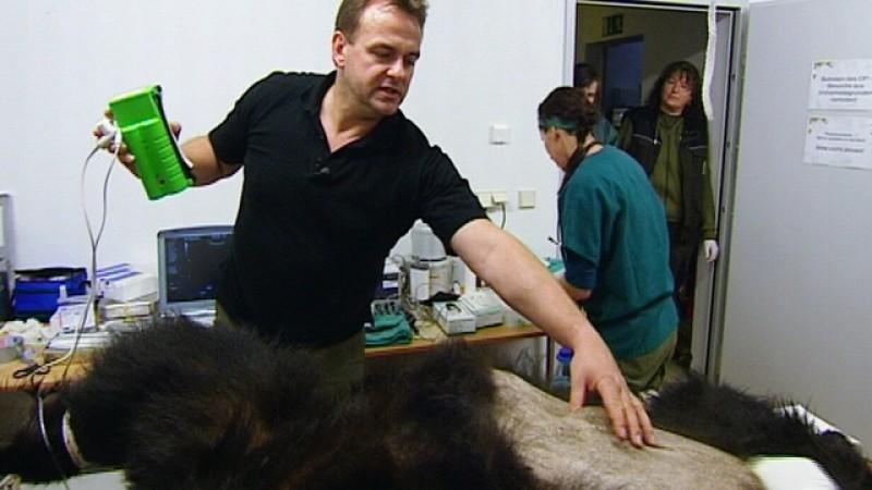 Vox Tierarzt