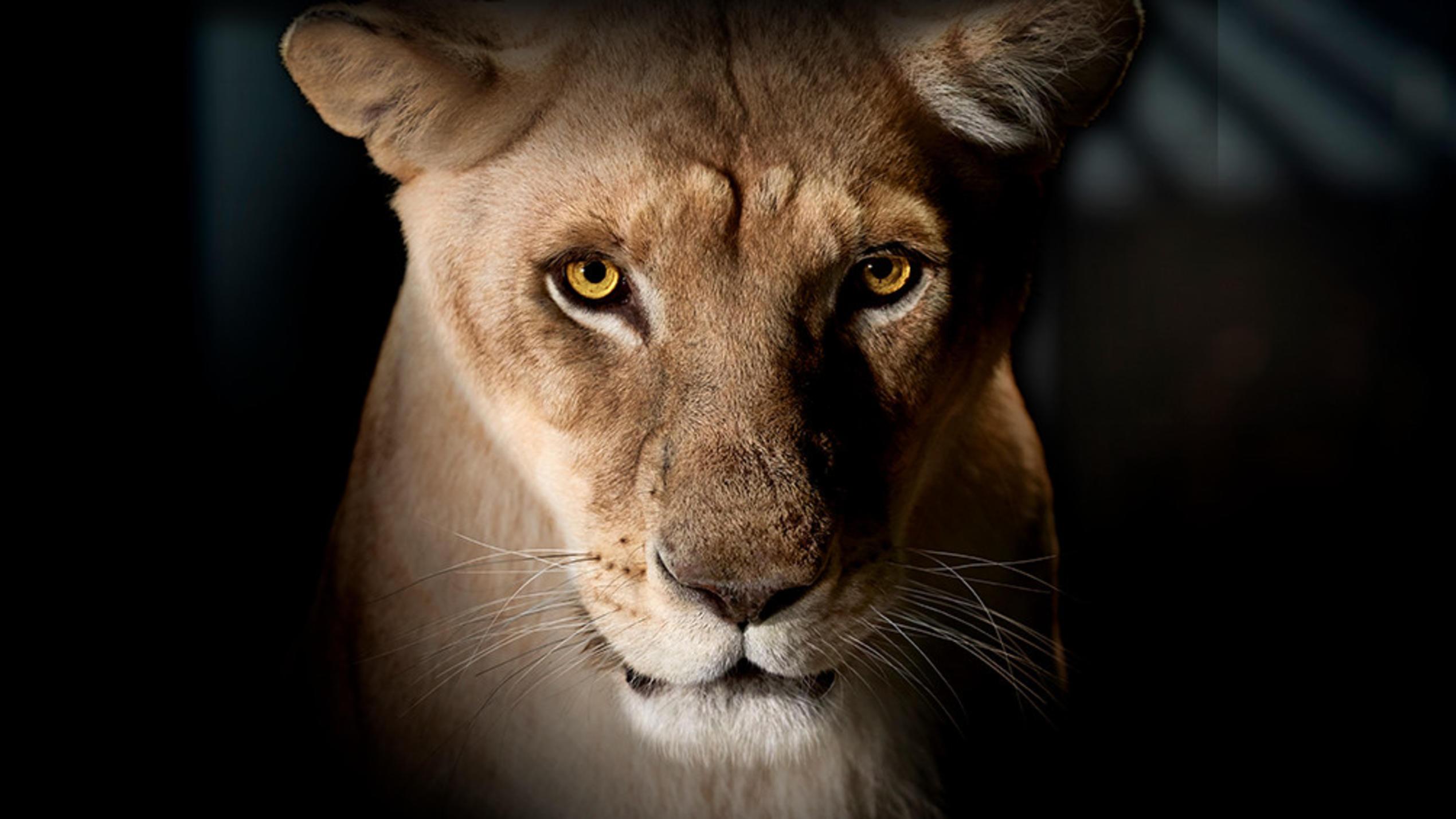 Die Höhle Der Löwen 2019 Sendetermine