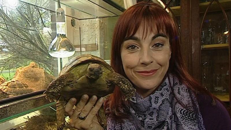 Mini Kühlschrank Für Schildkröten : Ist diese haltung wasserschildkröte artgerecht tiere schildkröten
