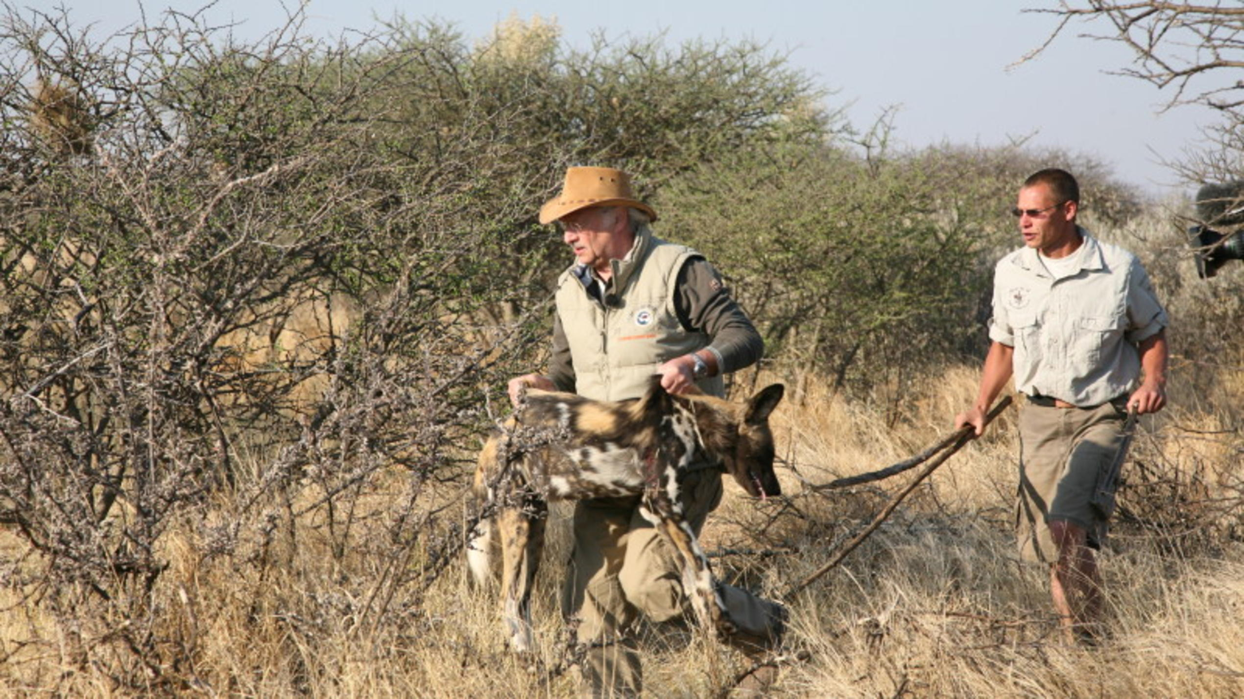 hundkatzemaus-Tierarzt Dr. Wolf in Namibia