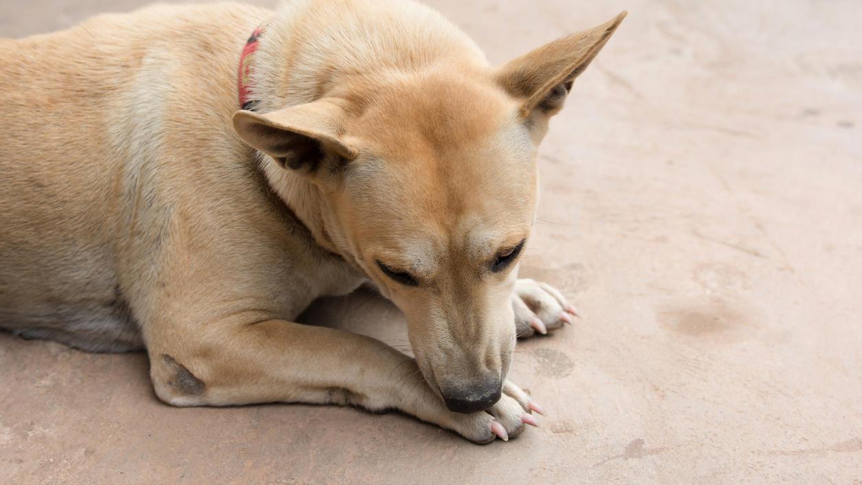 Hundeprofi Martin Rütter kennt den Grund: Das steckt