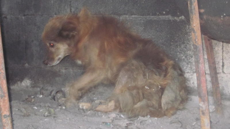 Hund Katze Maus Tierarzt Ralf