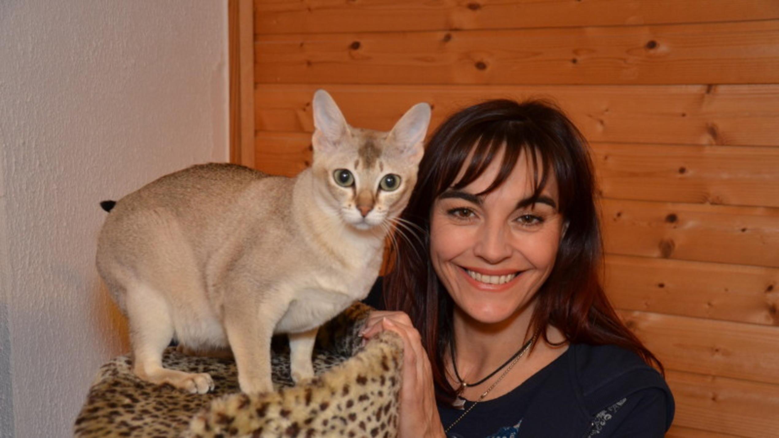Welt kleinste katzen der Die kleinste