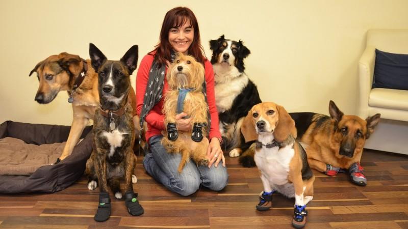 Was Taugen Hunde Pfotenschutzschuhe Wirklich