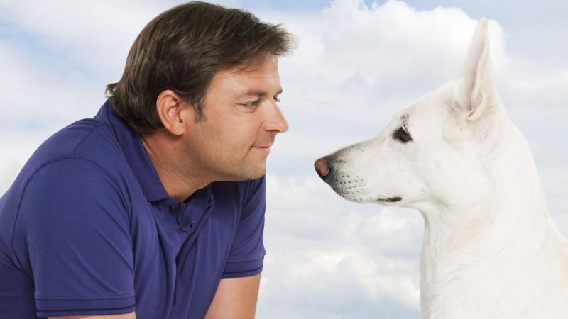 der hundeprofi unterwegs