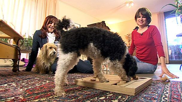 Selbstgemachtes Hundespielzeug
