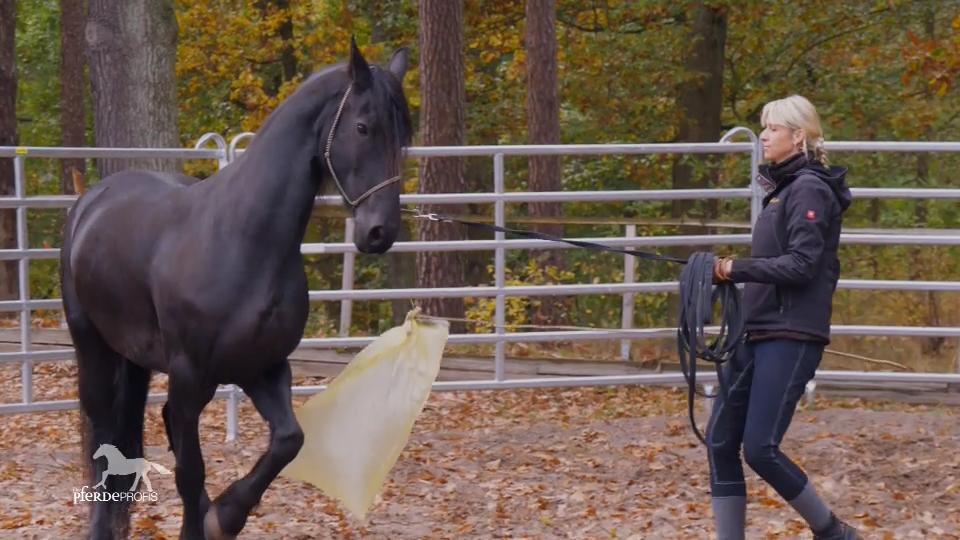 pferdeprofis ganze folge