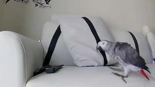 Ein Papagei geht auf Erkundungstour