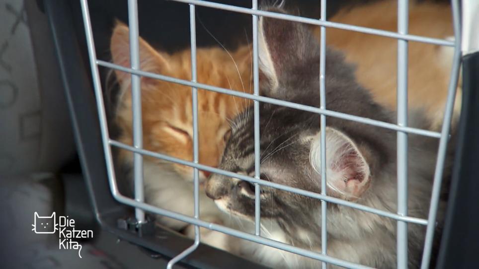 Wieso Haben Katzen Angst Vor Gurken