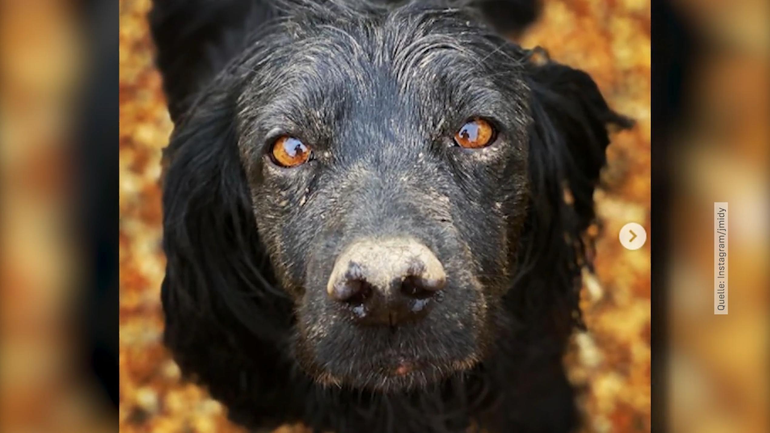 Hund Bei Zahnsteinentfernung Gestorben